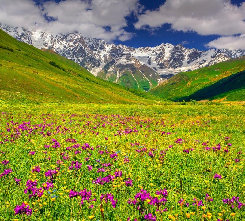 Schöne Ansicht von Alpenwiesen im Kaukasus stockfotografie