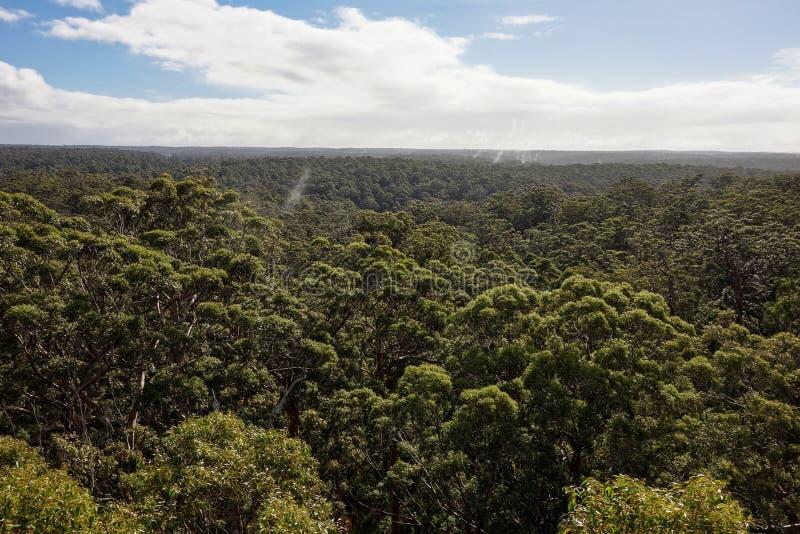 Schöne Ansicht von Dave Evans Bicentennial Tree in West-Australien lizenzfreies stockbild