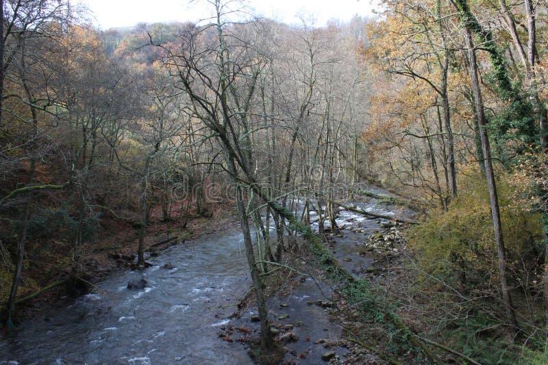 Schöne Ansicht von Fluss des langen Schwanzes innerhalb des Waldes lizenzfreies stockfoto