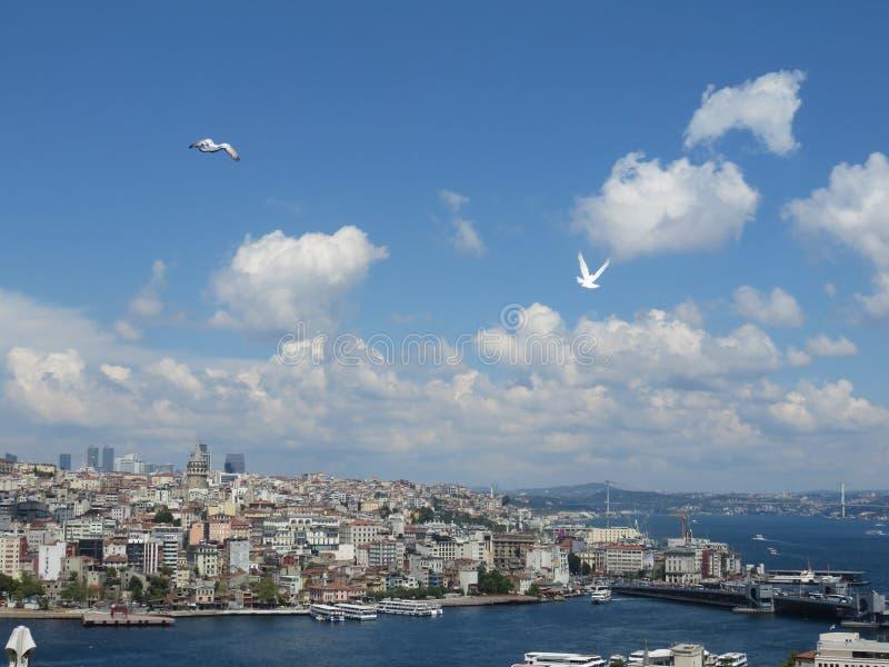 Schöne Ansicht zu Bosporus von der Höhe, von den Seemöwen und vom blauen Himmel im Hintergrund, Istanbul lizenzfreie stockbilder