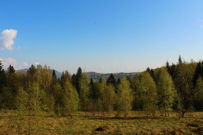 Schöne Ansichten der Karpaten-Berge lizenzfreies stockfoto