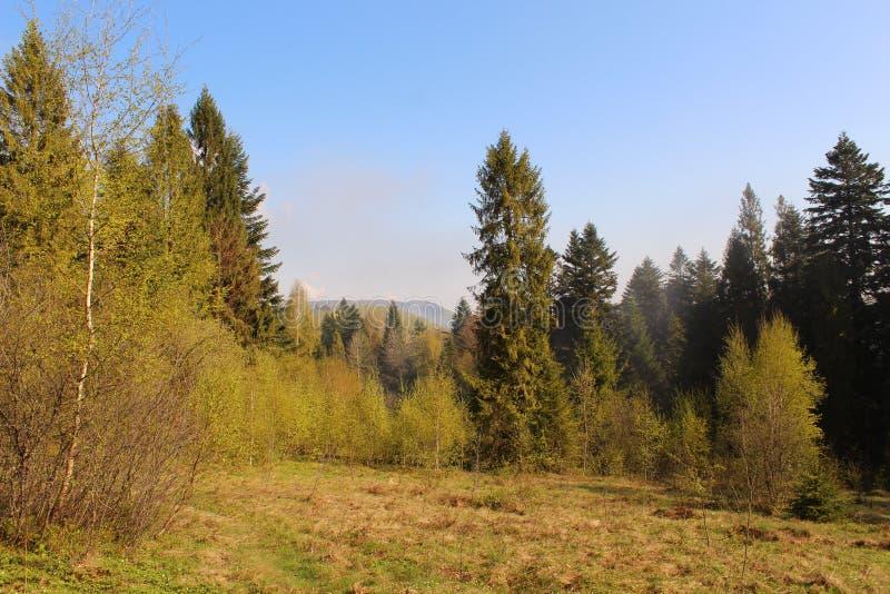 Schöne Ansichten der Karpaten-Berge lizenzfreie stockfotos