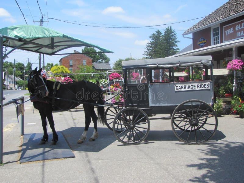 Schöne Arbeitspferde für die Amische in Pennsylvania lizenzfreies stockbild
