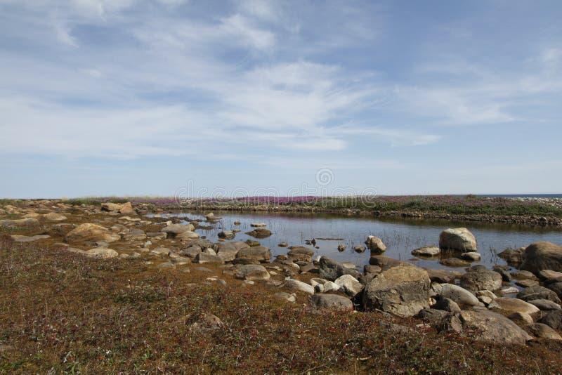 Schöne arktische Landschaft in den Sommerfarben mit blauen Himmeln und weichen Wolken lizenzfreies stockbild