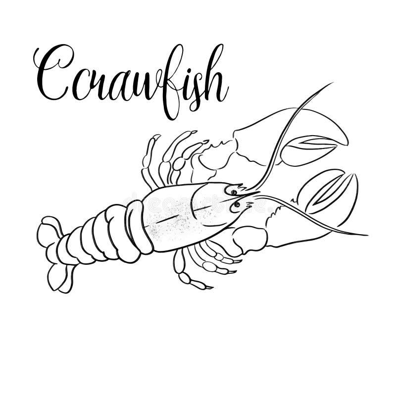 Schöne Art Animal Print Crawfish Linie Vektorgrafik vektor abbildung