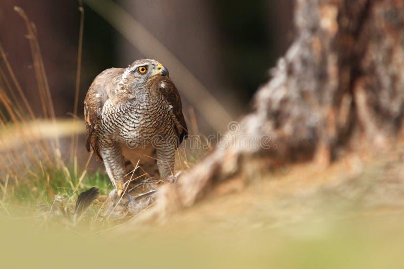 Schöne Art von Tschechen Wilde Natur stockfotos