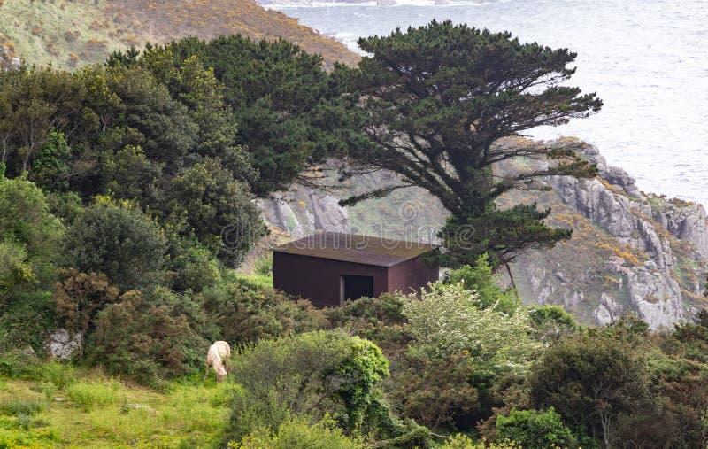 Sch?ne Aussicht auf einer Klippe mit Kiefer und Eichen, einem acseta und einem Schimmel auf der K?ste von Galizien, Spanien lizenzfreie stockfotografie