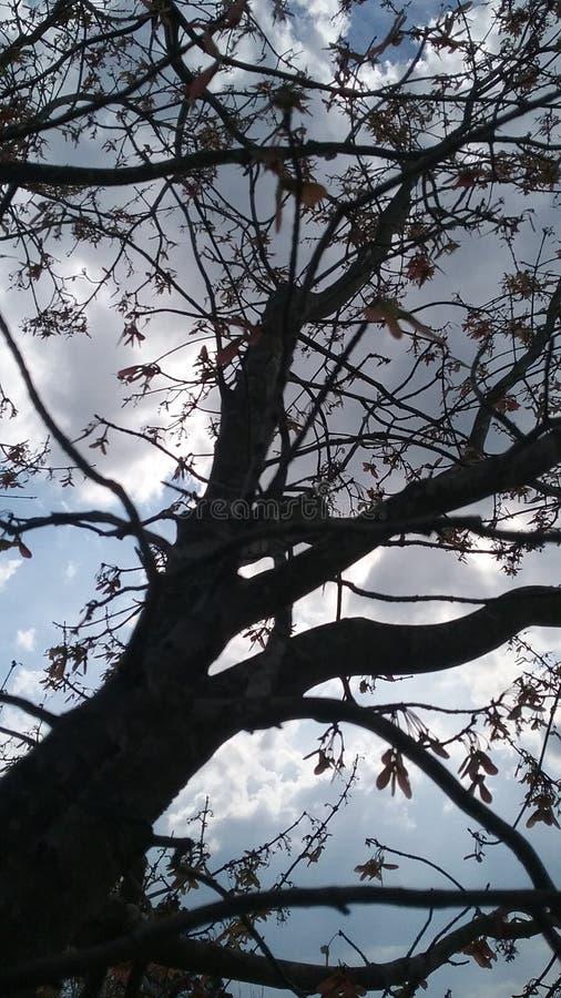Schöne Bäume lizenzfreie stockfotografie