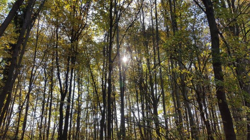 Schöne Bäume lizenzfreie stockbilder