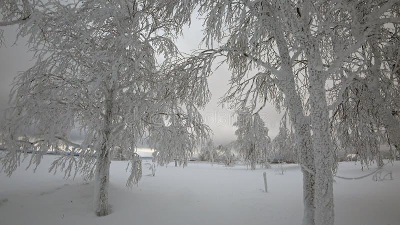 Schöne Bäume, bedeckt durch Schnee im Winter stock footage