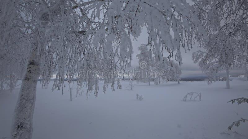 Schöne Bäume, bedeckt durch Schnee im Winter stock video footage