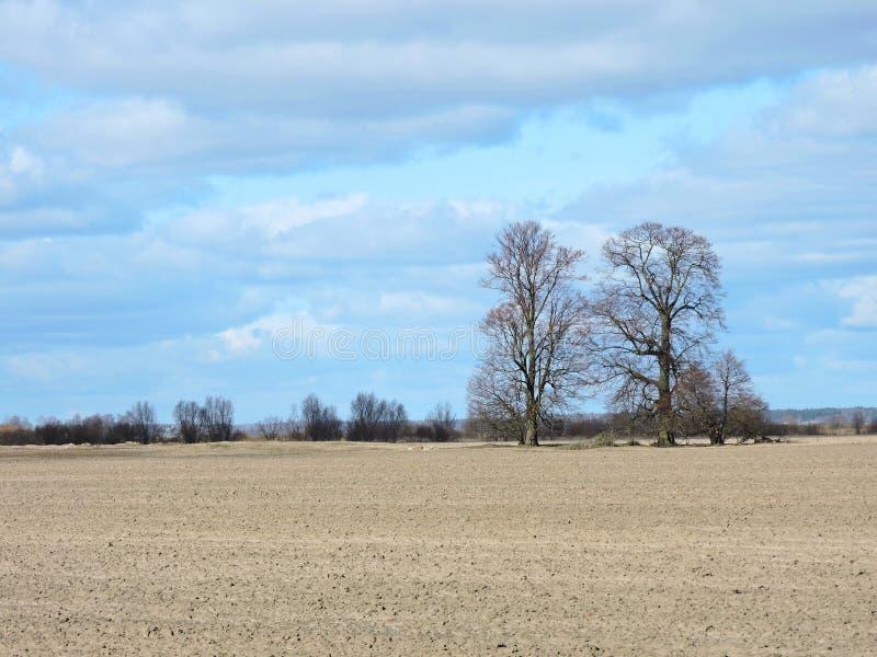 Schöne Bäume und bewölkter Himmel im Frühjahr, Litauen lizenzfreie stockbilder