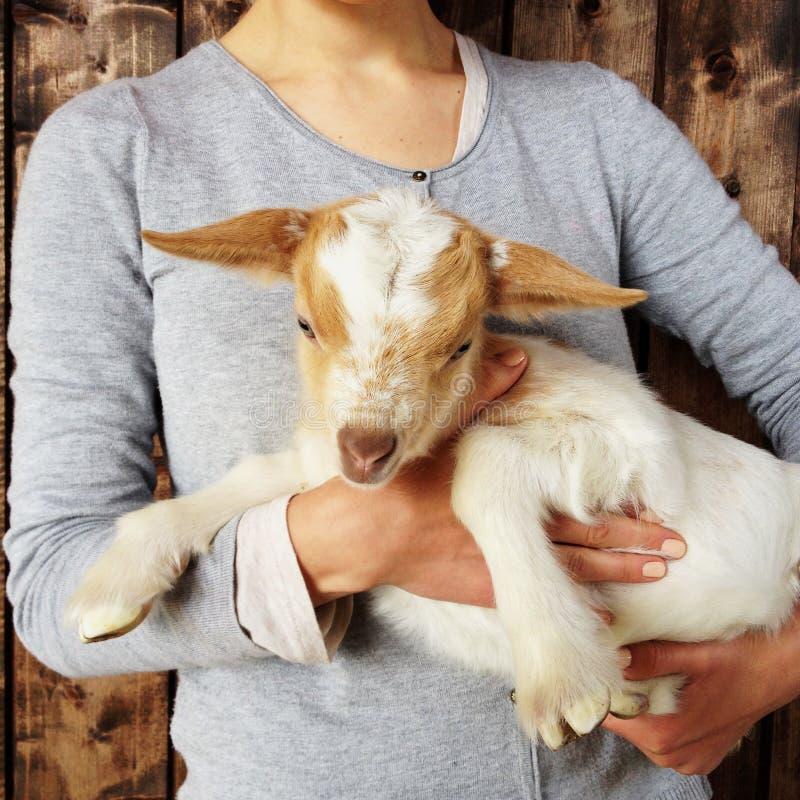 Schöne Babyziege in den Händen der Frau, Abschluss oben Bauernhoflebensstil, rustikale Szene, hölzerner Hintergrund lizenzfreies stockfoto