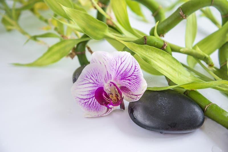 Schöne Badekurort- oder Körperpflegezusammensetzung mit Orchideenblume, schwarzen Massagesteinen und Bambusstämmen mit Tropfen lizenzfreie stockbilder