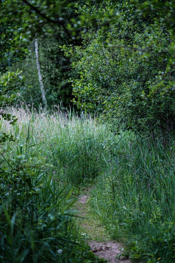 schöne Bahn im grünen Wald nach dem Regen lizenzfreies stockbild