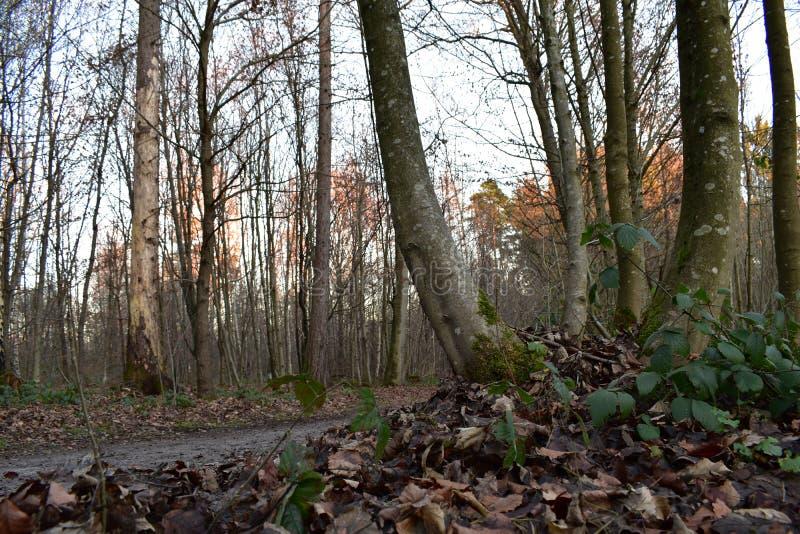 Schöne Baumlandschaft lizenzfreies stockbild