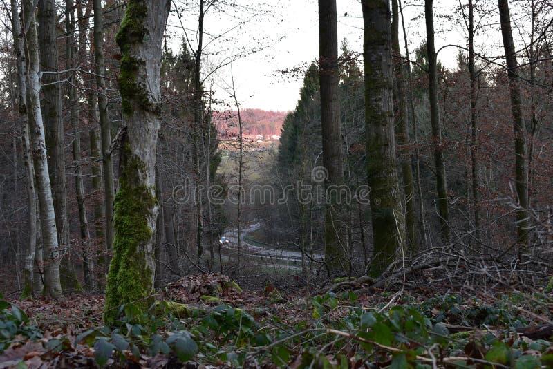 Schöne Baumlandschaft stockbild