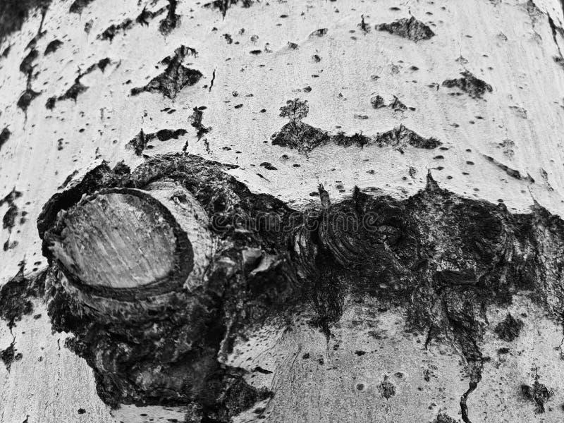 Schöne Beschaffenheit der Baumrinde mit Moos und Form stockfotografie