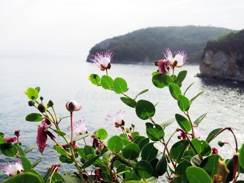 Schöne Beschaffenheit der Seeküste lizenzfreie stockfotografie