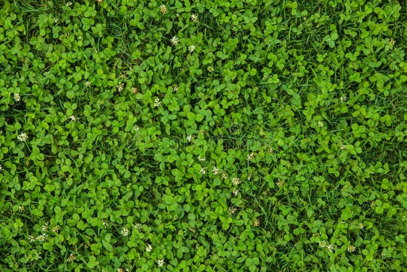 Schöne Beschaffenheit des grünen Grases lizenzfreie stockbilder
