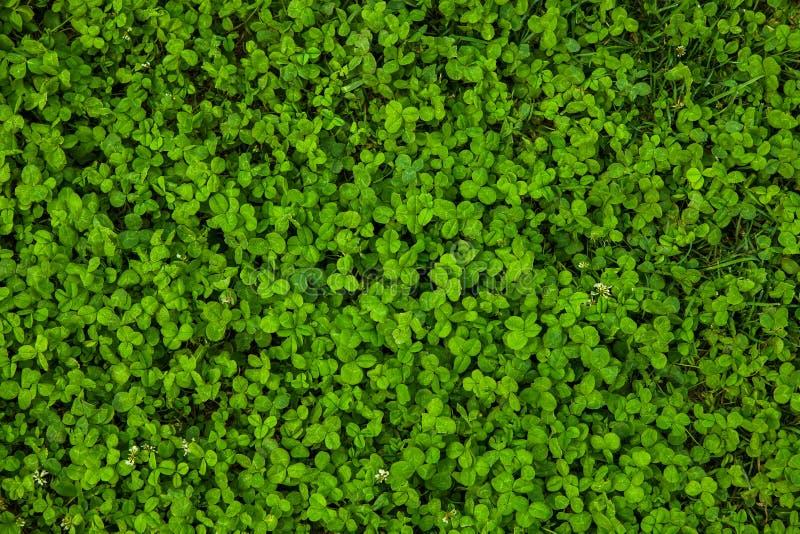 Schöne Beschaffenheit des grünen Grases stockbilder