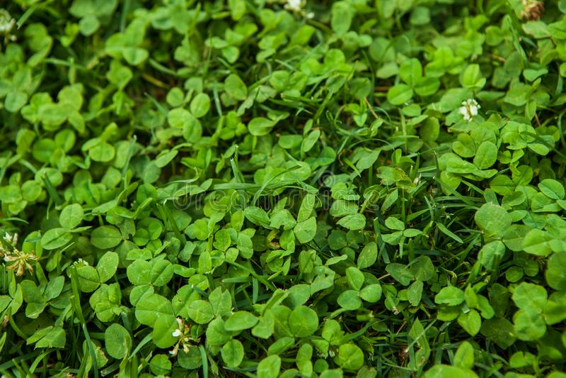 Schöne Beschaffenheit des grünen Grases stockfotos
