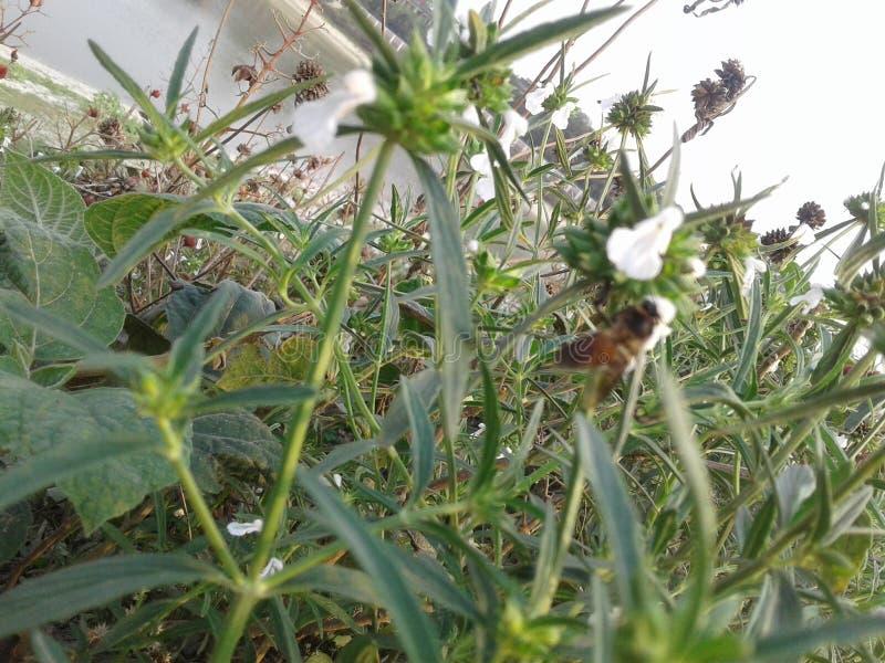 Schöne Biene stockbild