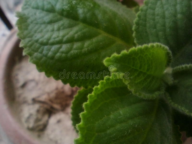 Schöne Blätter stockfotos