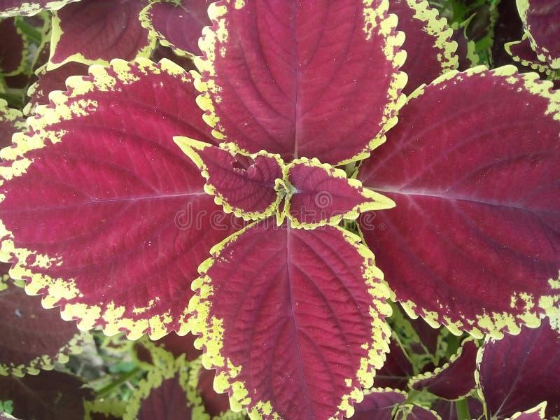 Schöne Blätter in einem Dorf lizenzfreies stockfoto