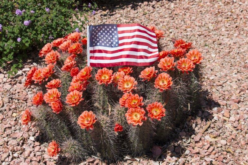 Schöne blühende wilde Wüstenkaktusblumen lizenzfreies stockbild