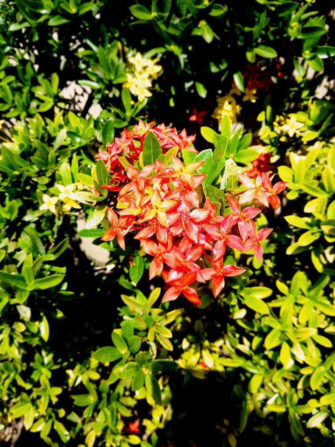 Schöne Blütenblumen stockbild