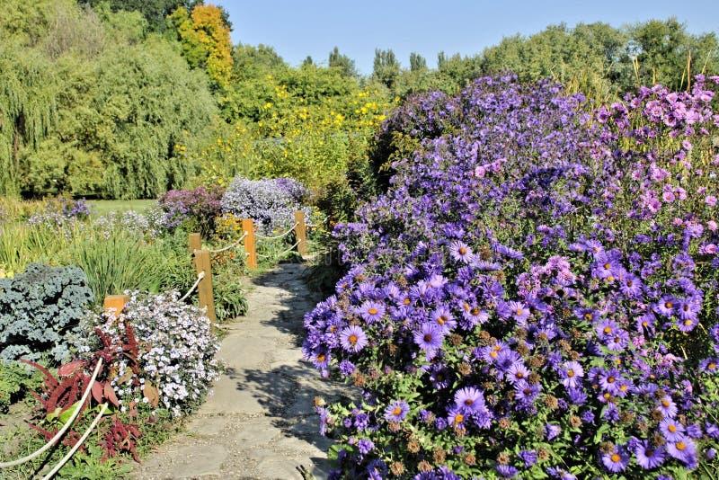 Schöne blaue Blumen grünes Blatt romantische Natur Blumen Garten noch Leben Botanik Landschaft stockfoto