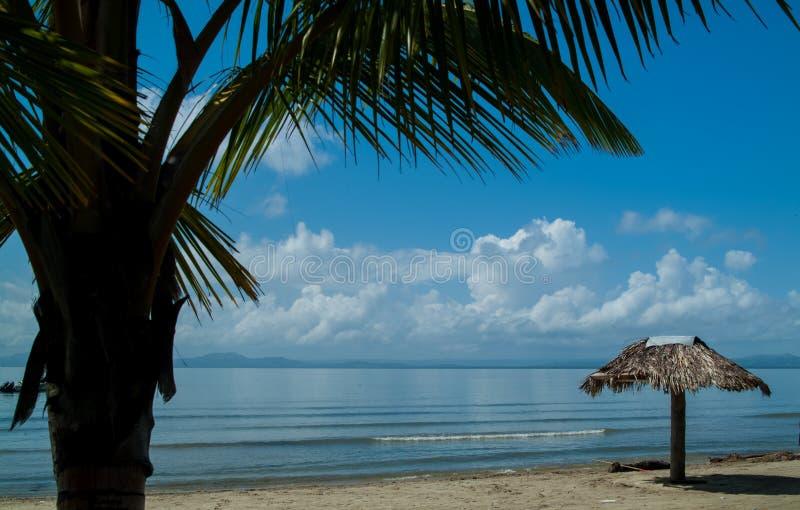 Schöne blaue Bucht, Schuss durch die Niederlassungen einer Palme lizenzfreie stockfotografie