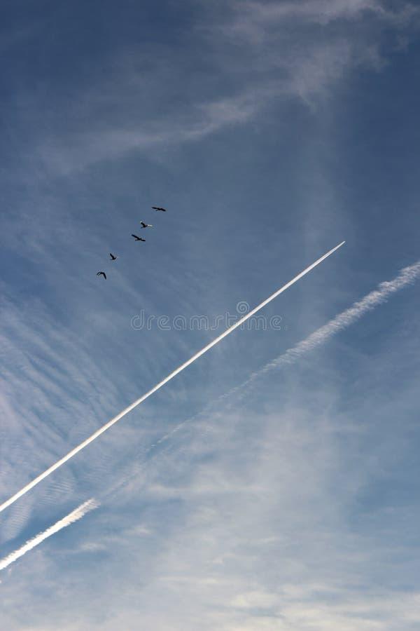 Schöne blaue Himmel mit Wolken, Jetstreams und Zahl von den Vögeln, die oben fliegen stockfotografie