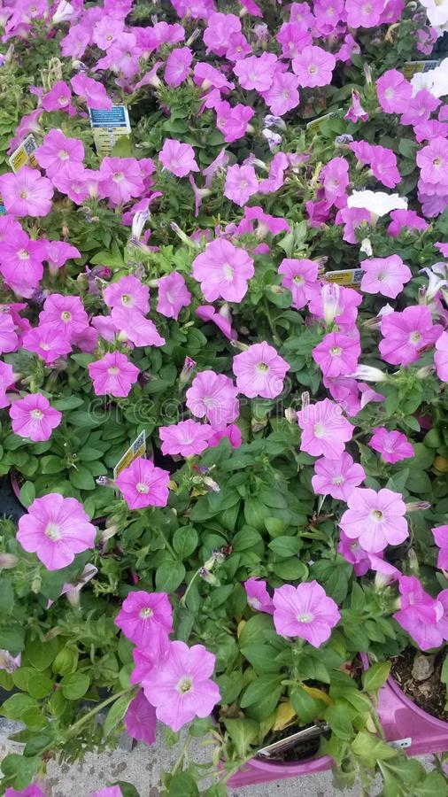 Schöne Blume stockfotos