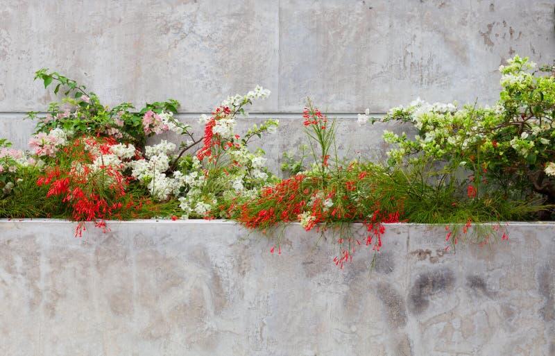 Schöne Blume auf dem Zementwandhintergrund lizenzfreies stockfoto
