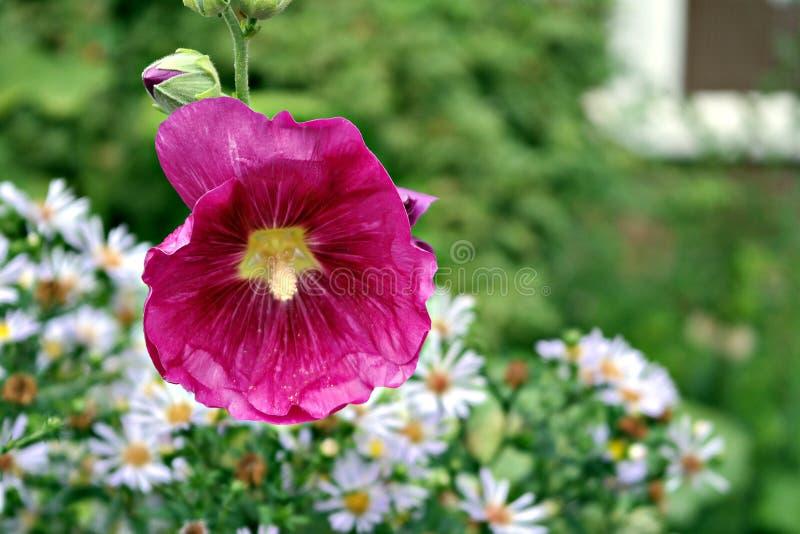 Schöne Blume auf einem schönen Hintergrund stockfotografie
