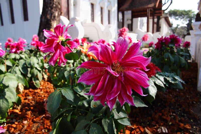 Schöne Blume bei Lanna Resort stockfoto