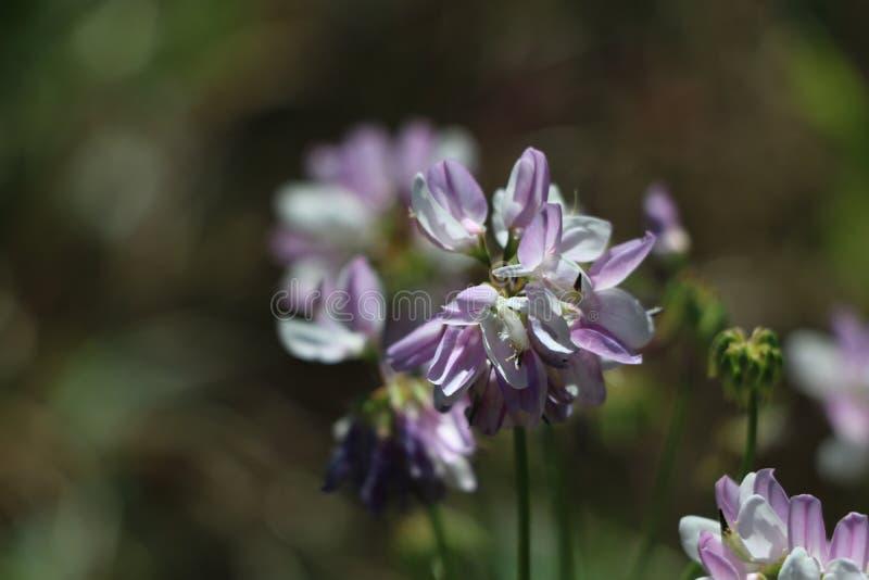 schöne Blume in der Sommersonne lizenzfreies stockfoto
