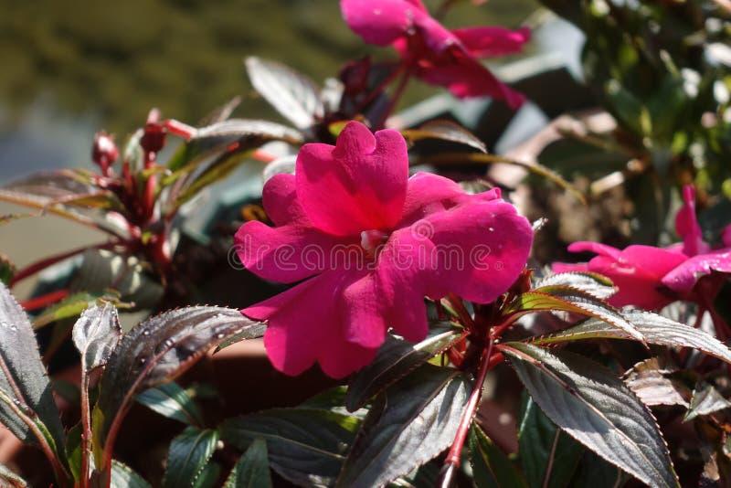 Schöne Blume in einem Garten lizenzfreie stockfotos