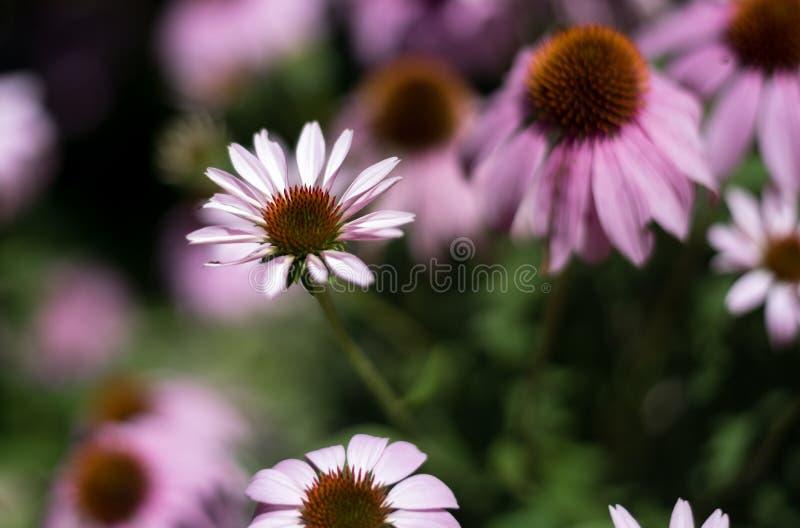 Schöne Blume in einem Stadtgarten lizenzfreie stockbilder