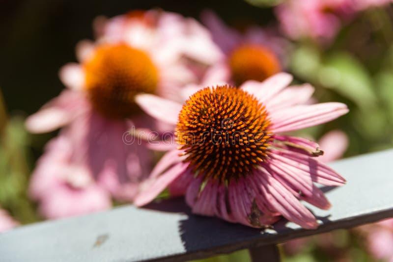 Schöne Blume in einem Stadtgarten stockbild