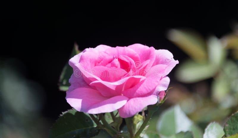 Schöne Blume in einem Stadtgarten stockfotos