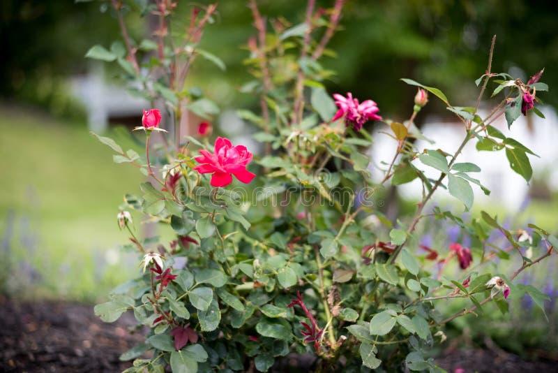 Schöne Blume in einem Stadtgarten stockfoto