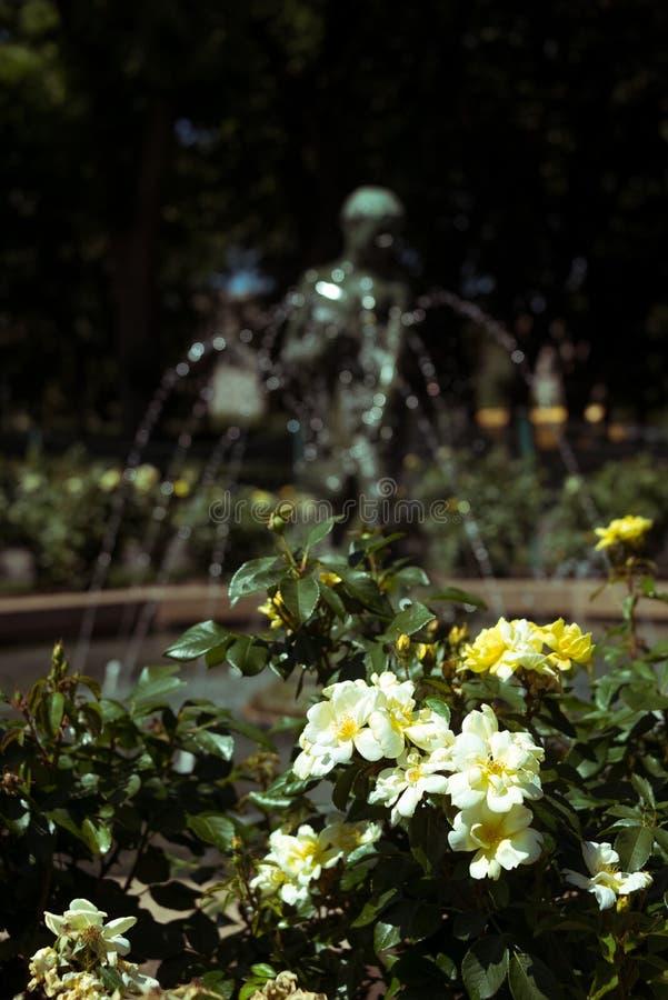 Schöne Blume in einem Stadtgarten lizenzfreie stockfotografie