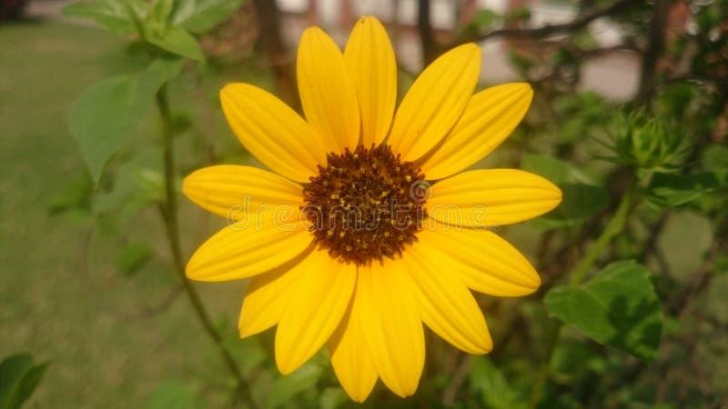 Schöne Blume für Hintergrundtapete stockbilder
