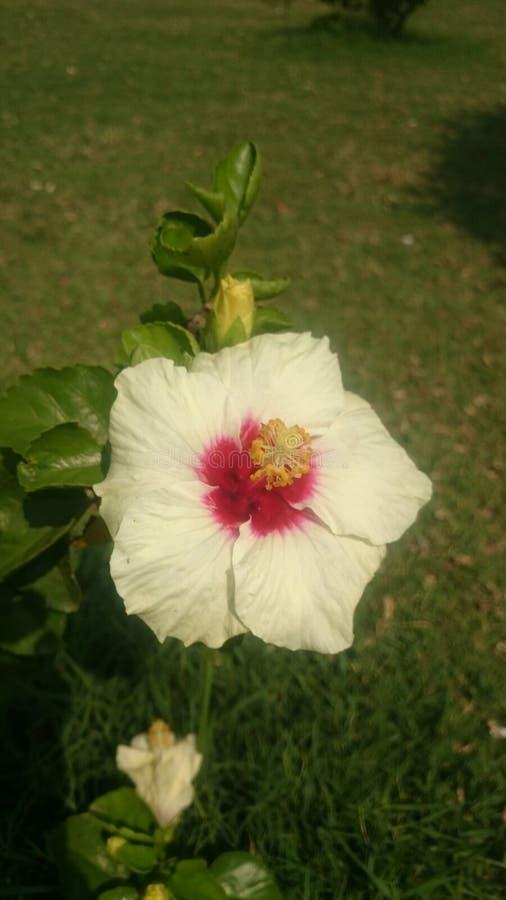 Schöne Blume 2 für Hintergrundtapete stockbilder