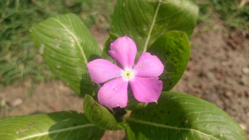 Schöne Blume für Hintergrundtapete lizenzfreie stockfotografie