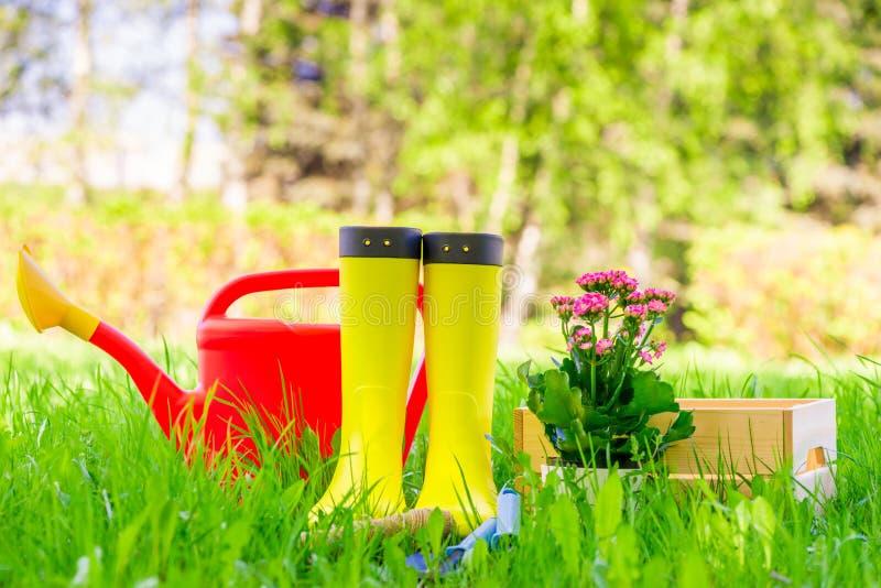 Sch?ne Blume, gelbe Stiefel und eine Gie?kanne auf einem gr?nen Rasen im Hinterhof lizenzfreie stockbilder