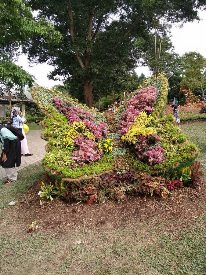 Schöne Blume in malaysischer Landwirtschaft, in Gartenbau u. in Agrotourism Asiens lizenzfreies stockbild